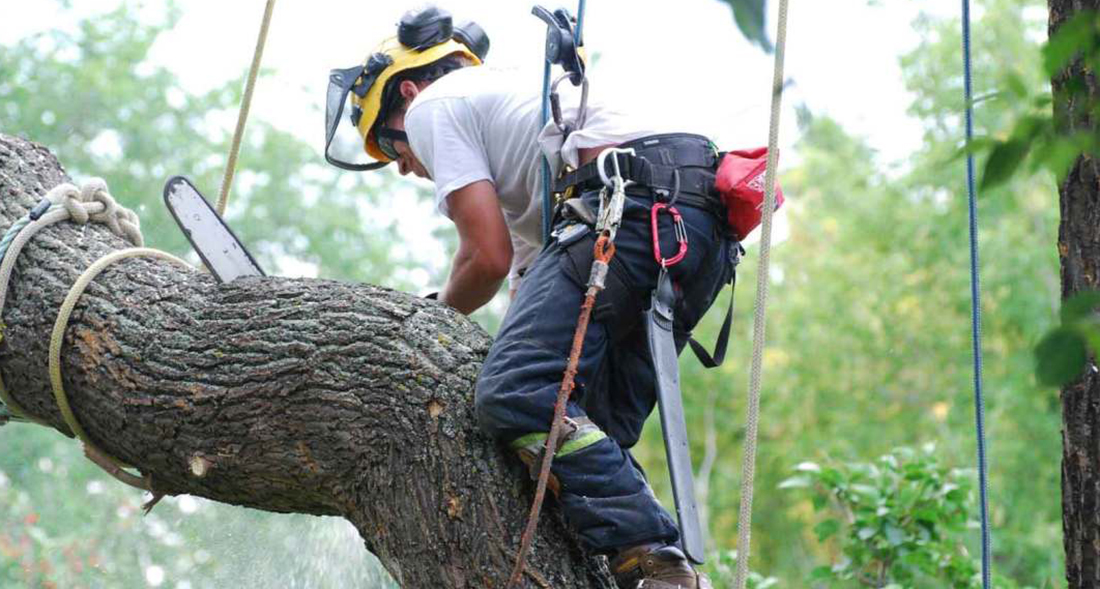 affordable tree service near me