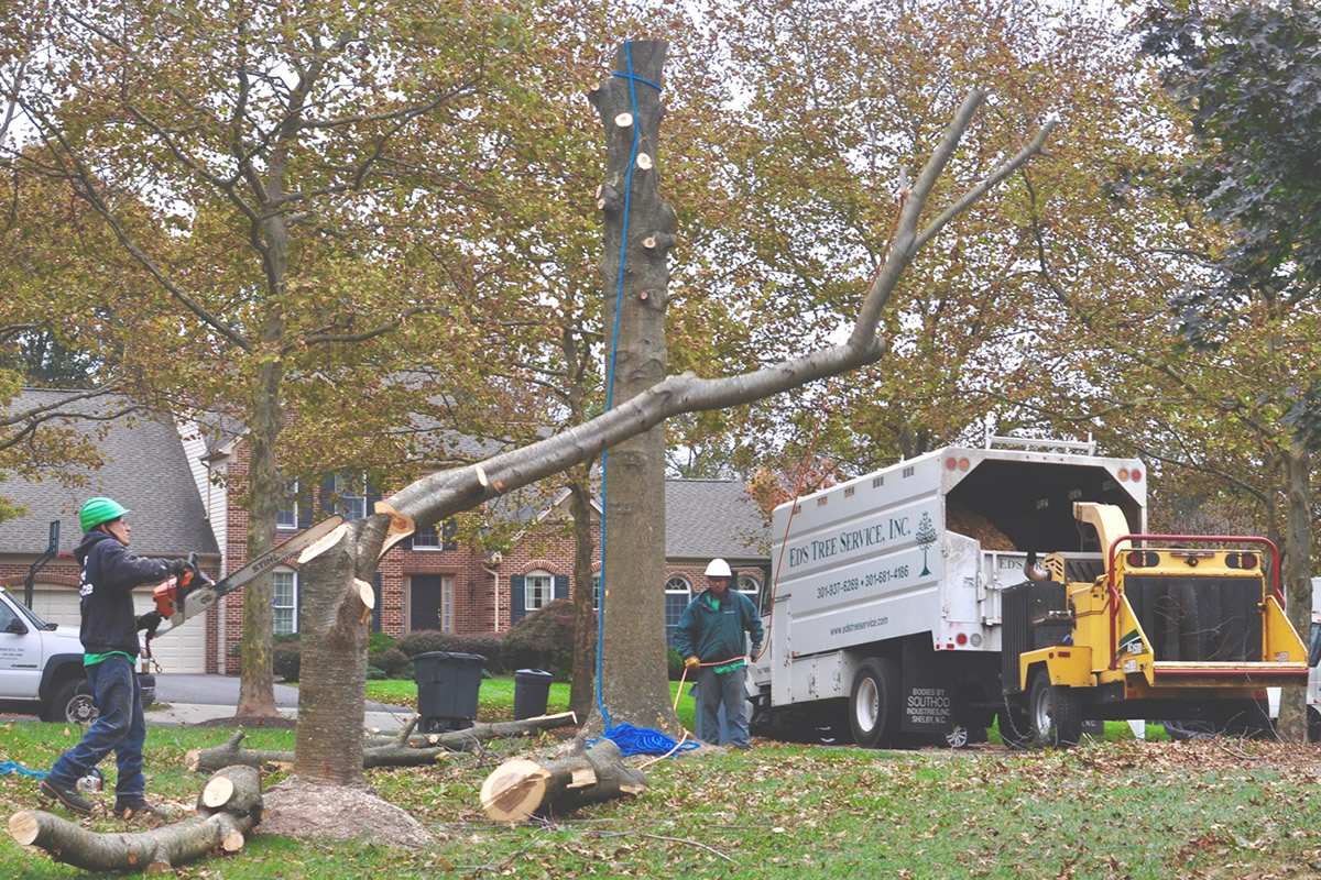 Some Tips on Choosing The Best Tree Removal Professionals – ASTR