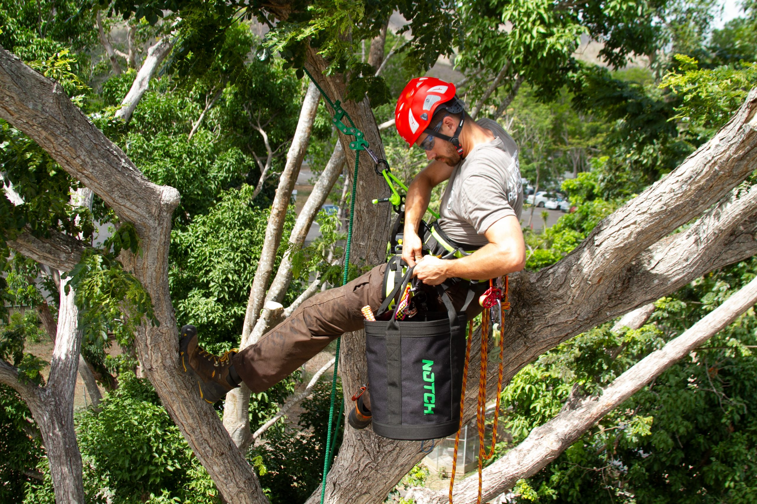 what is an arborist salary